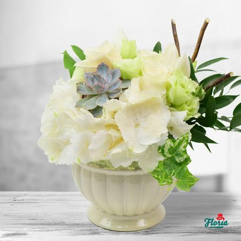 floraria1