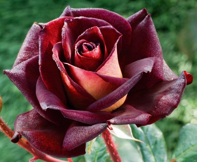 rosier-eddy-mitchell-2