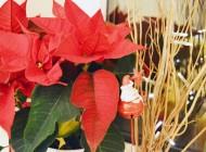 4 tradiții de Crăciun ale noastre care să vă inspire