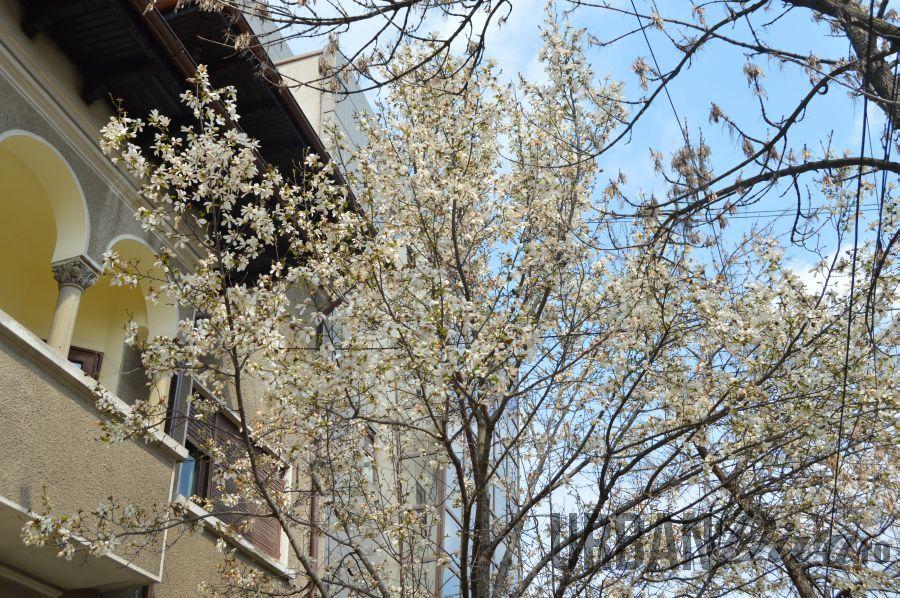 magnolie1565