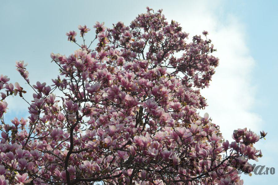 magnolie1788