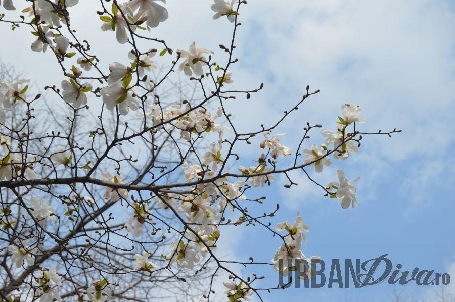 magnolie1e5