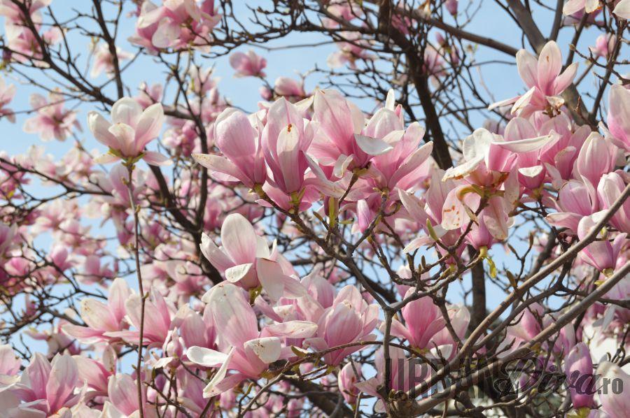magnolie1nbnb