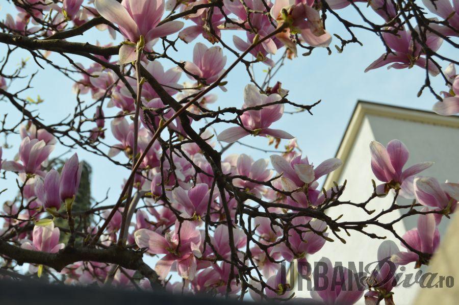 magnolie1nn
