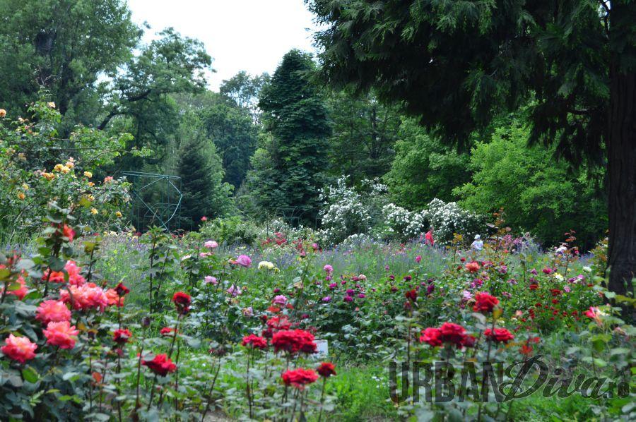 roses_urban_divaro_30