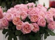 Famous Roses – Cei mai frumosi trandafiri frantuzesti care iti innobileaza gradina