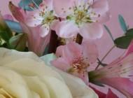 L'Occitane: gama Cherry Blossom Folie Florale, un omagiu adus florilor de cireș